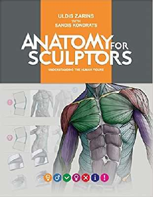 Anatomy for Sculptors Understanding the Human Form